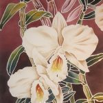 WHITE ORCHIDS 2