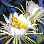 Nite Blooming Cereus